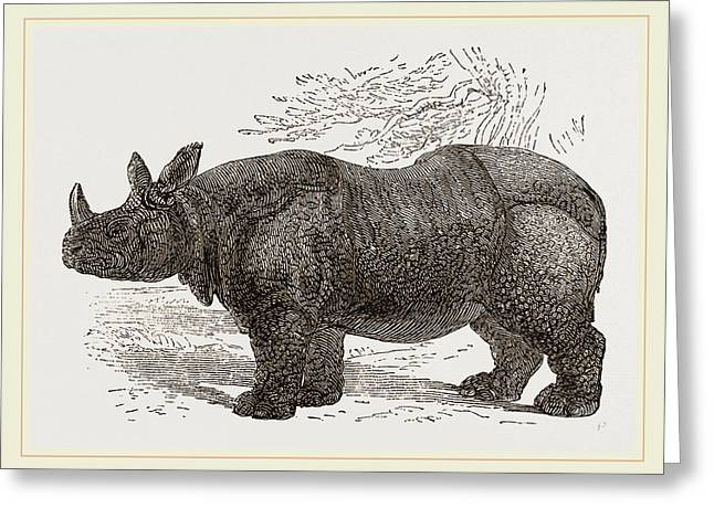 Indian Rhinoceros Greeting Card by Litz Collection
