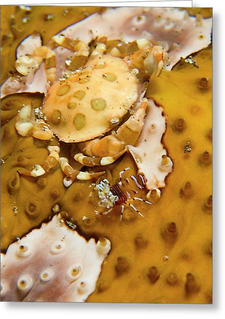 Indonesia, Sulawesi Island, Lembeh Greeting Card by Jaynes Gallery