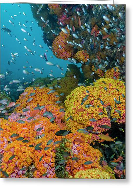 Indonesia, West Papua, Triton Bay Greeting Card by Jaynes Gallery