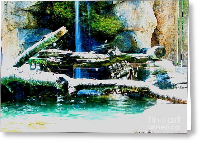Indoor Nature Greeting Card by Greg Patzer