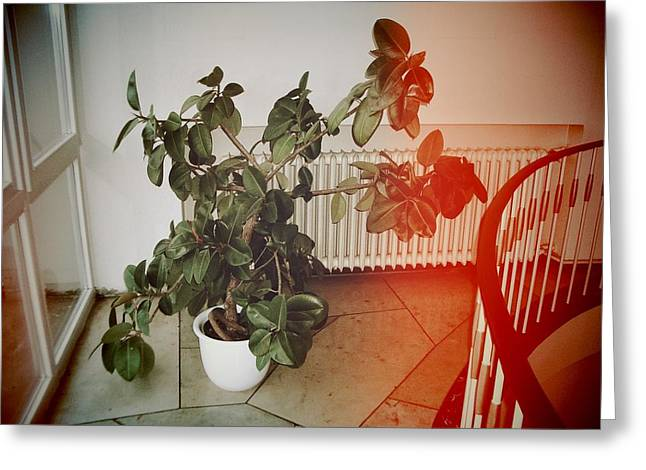 Indoor Plant Standing In The Hallway Greeting Card