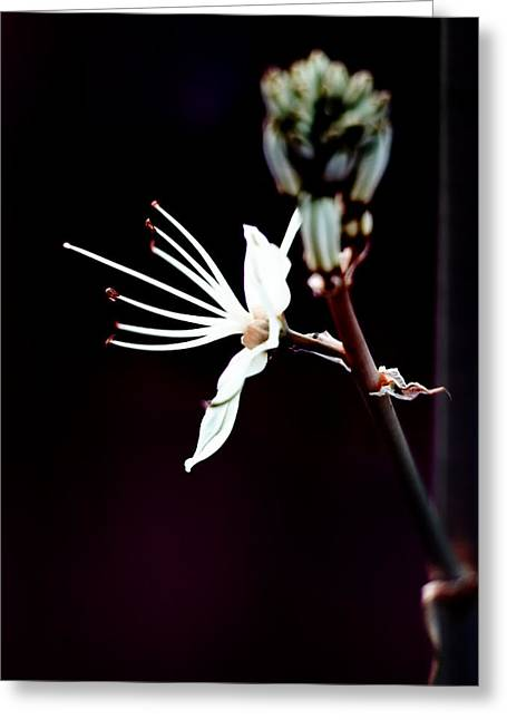 infrared Asphodel Greeting Card by Stelios Kleanthous