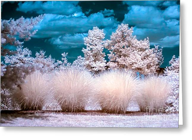 Infrared Bushes Greeting Card