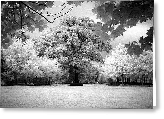 Infrared Majesty Greeting Card