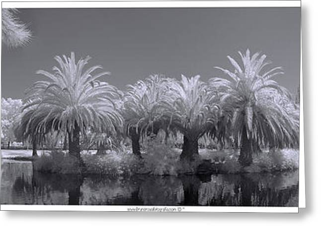 Infrared On A Sunny Afternoon Greeting Card
