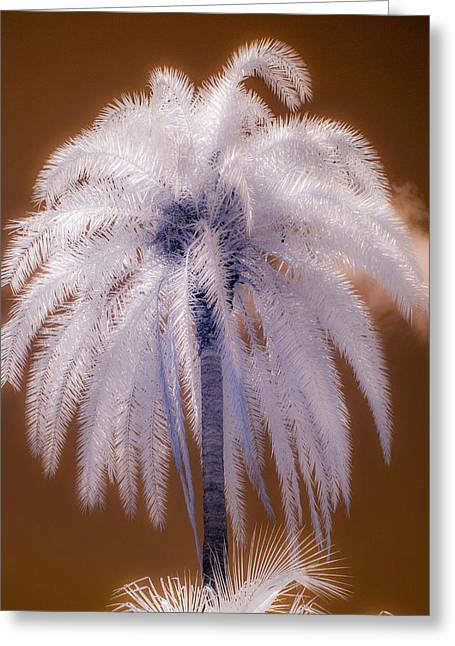 Infrared Palm Tree Greeting Card