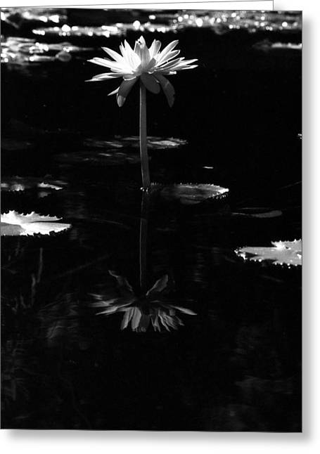 Infrared - Water Lily 03 Greeting Card