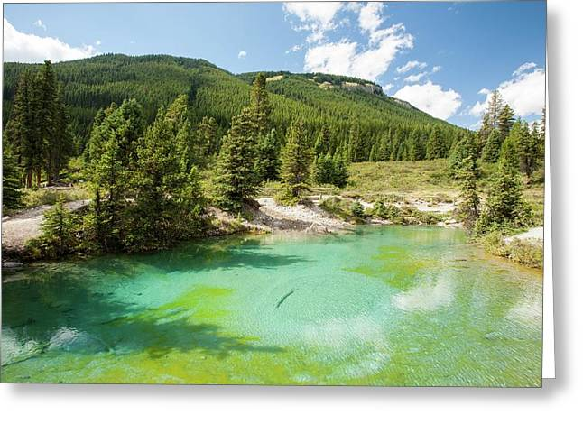 Ink Pots Limestone Spring Water Pool Greeting Card by Ashley Cooper