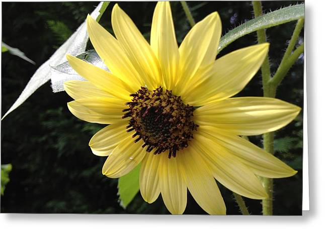 Greeting Card featuring the photograph Inner Light by Alan Lakin