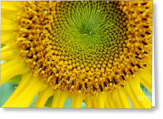 Inner Peace Forms Within This Sweet Yellow Sunflower Greeting Card by Eunice Miller