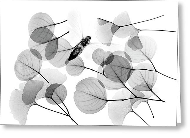 Insect And Plant Leaves Greeting Card by Albert Koetsier X-ray