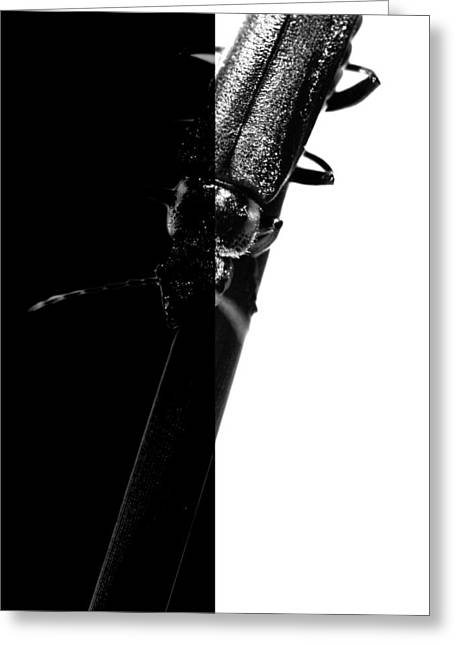 Insect In Black And White Greeting Card by Tommytechno Sweden