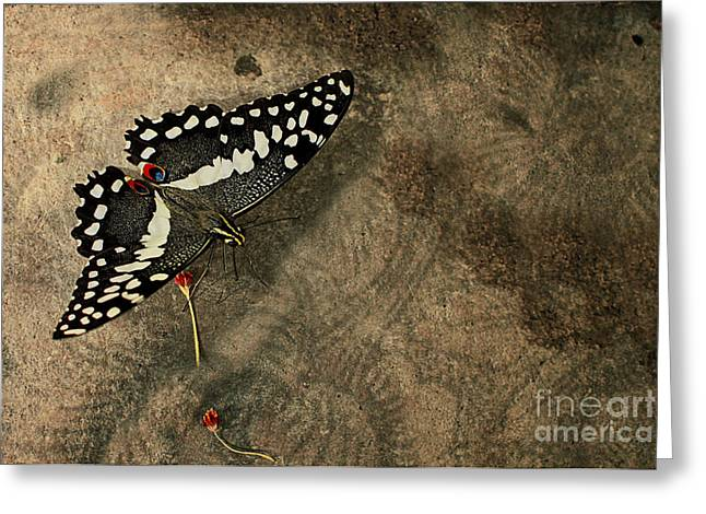 Insect Study Number 30 Greeting Card by Floyd Menezes