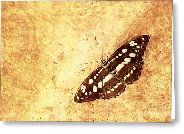 Insect Study Number 66 Greeting Card by Floyd Menezes
