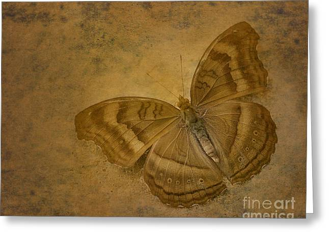 Insect Study Number 94 Greeting Card by Floyd Menezes