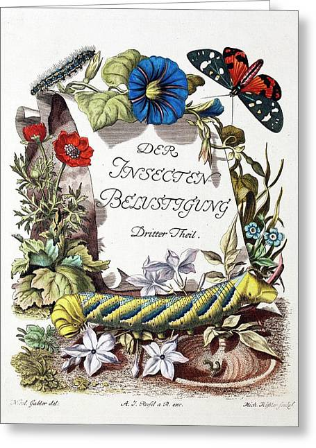 Insecten-belustigung Greeting Card