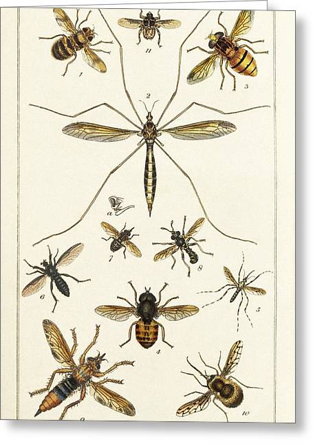 Insects Greeting Card by King's College London