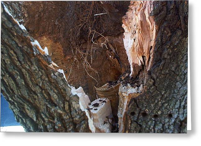Greeting Card featuring the photograph Inside A Bradford Pear Tree by Emmy Marie Vickers