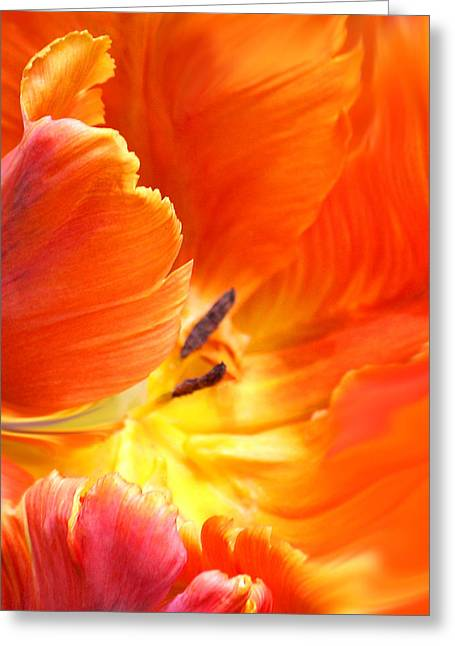 Greeting Card featuring the photograph Inside Her Journey by The Art Of Marilyn Ridoutt-Greene