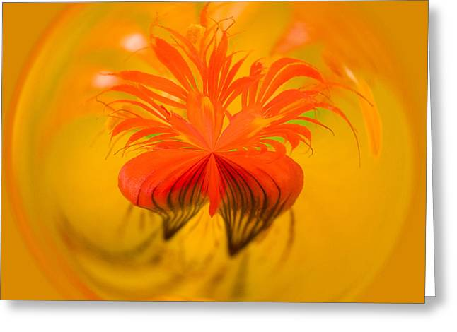 Inside Out Nasturtium Greeting Card by Anne Gilbert