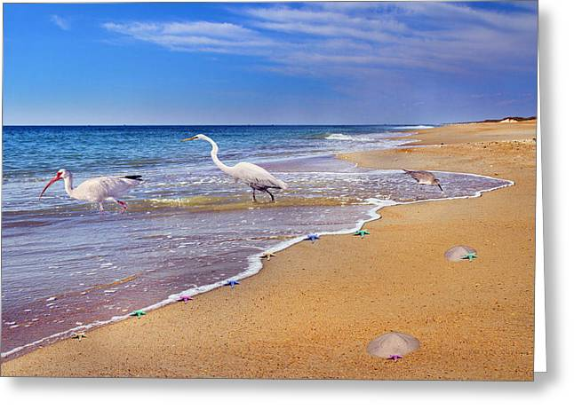 Inspiring Ibis Egret Sandpiper Starfish Sand Dollars  Greeting Card by Betsy Knapp