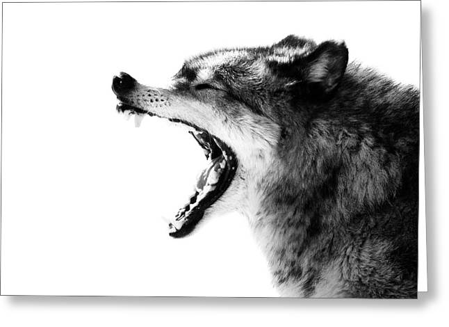Intense Gray Wolf Portrait  Greeting Card