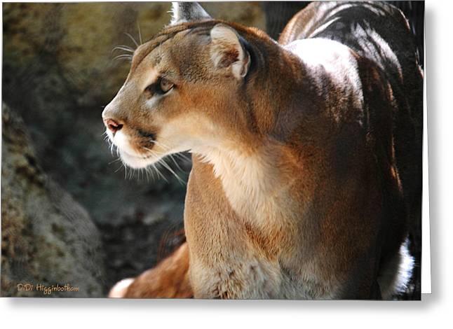 Intense Mountain Lion Greeting Card by DiDi Higginbotham