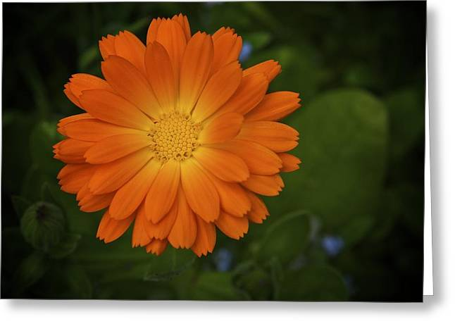 Intense Orange Greeting Card by Terry Horstman