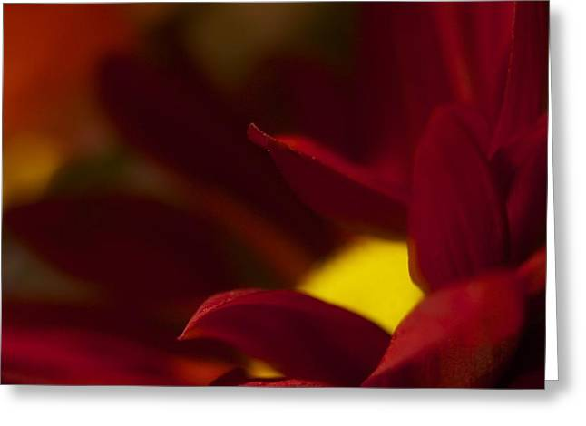 Intense Red Greeting Card by Terry Horstman
