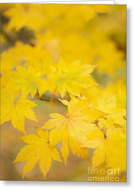 Intensely Yellow Greeting Card by Anne Gilbert