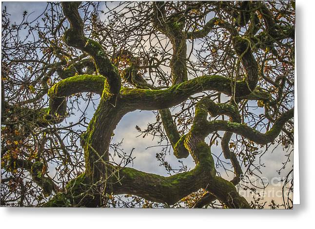 Intertwined Greeting Card by Mitch Shindelbower