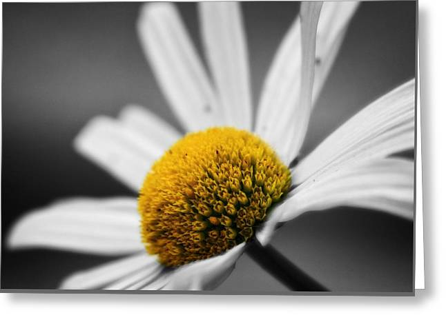 Intimate Daisy Greeting Card by Dan Sproul
