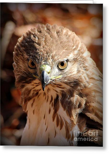Intimidation That Works Red Shouldered Hawk  Greeting Card