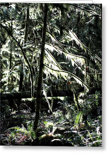 Into A Forest Of Twilight - Pacific Northwest Greeting Card