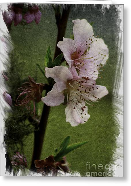 Greeting Card featuring the photograph Into Spring Abstract by Lori Mellen-Pagliaro