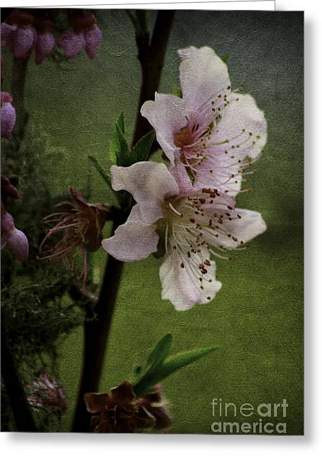 Greeting Card featuring the photograph Into Spring by Lori Mellen-Pagliaro