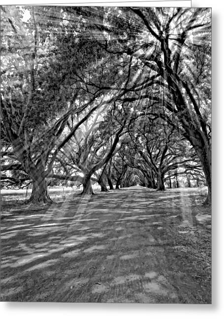 Into The Deep South Monochrome Greeting Card