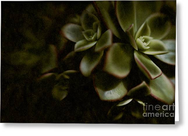 Into The Light Greeting Card by Venetta Archer
