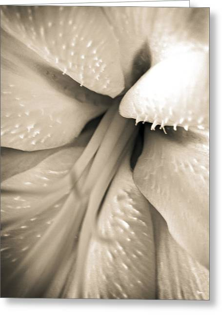 Into The Lily Greeting Card by Dave Garner