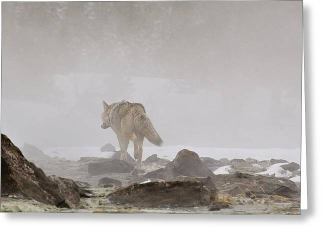 Greeting Card featuring the photograph Into The Mist by Yeates Photography