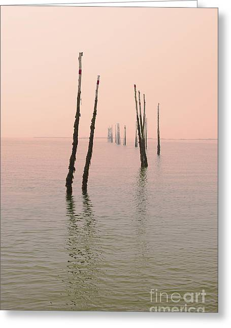 Into The Pink Sunset... Greeting Card