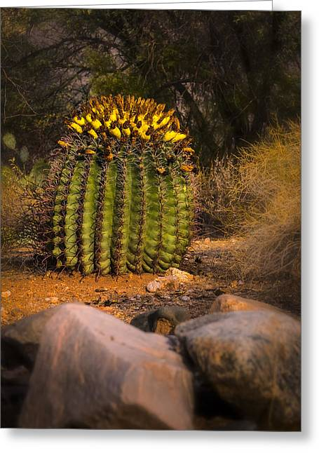Greeting Card featuring the photograph Into The Prickly Barrel by Mark Myhaver