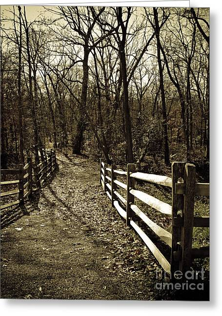Into The Woods In Sepia Greeting Card by Colleen Kammerer