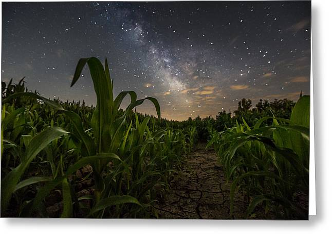 Iowa Corn Greeting Card