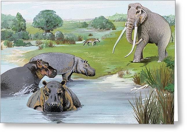 Ipswichian Interglacial Mammals Greeting Card by Natural History Museum, London/science Photo Library