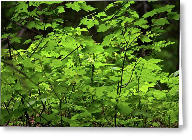 Greeting Card featuring the photograph Iridescent Green by Trever Miller