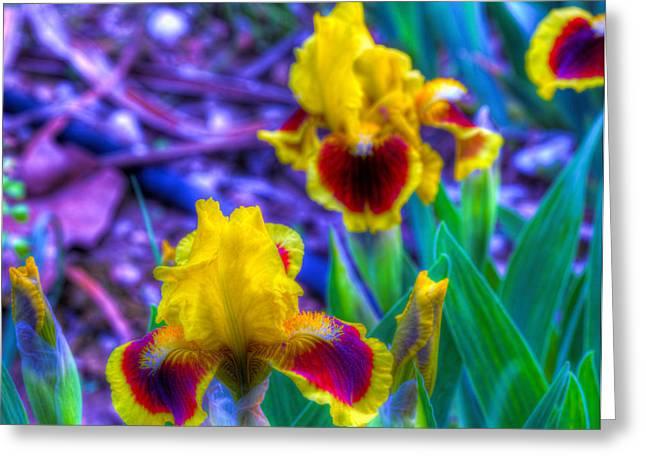 Iris #58 Greeting Card by John Derby