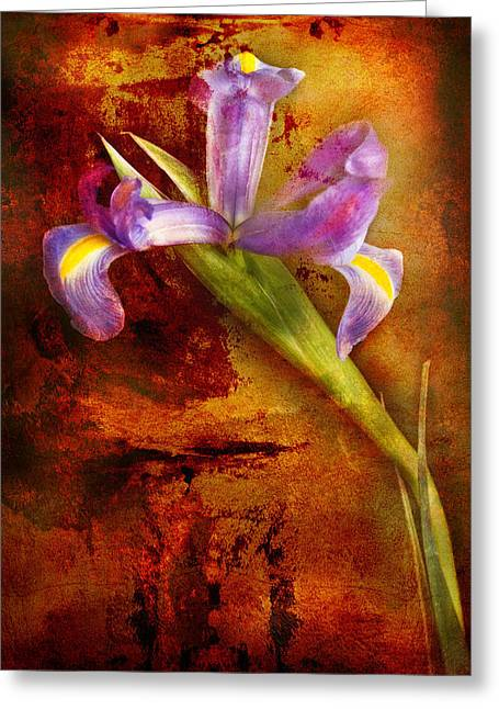 Greeting Card featuring the photograph Iris Art by Bob Coates