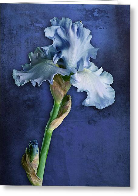 Greeting Card featuring the photograph Iris Art Cyan And Blue by Bob Coates