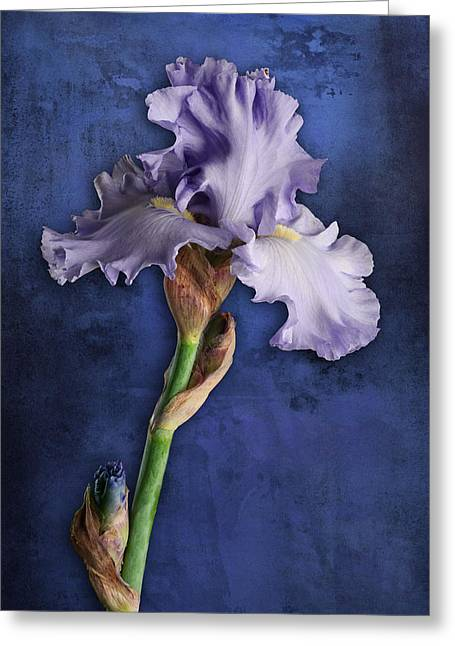 Greeting Card featuring the photograph Iris Art Lavender And Blue by Bob Coates